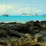 Galapagos, Wojtek Mura